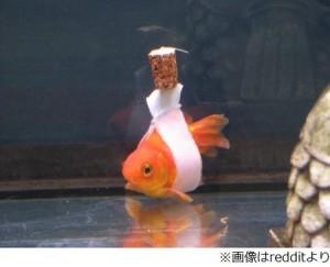 金魚車いす